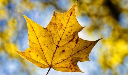 Editorial: Herbstpoesie