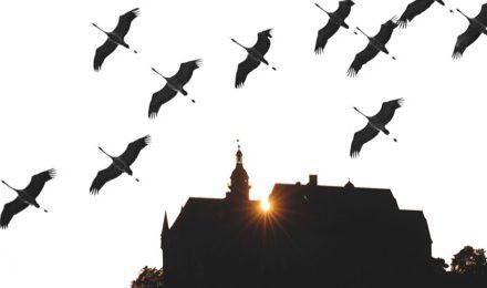Editorial: Die BI – typisch für Marburg